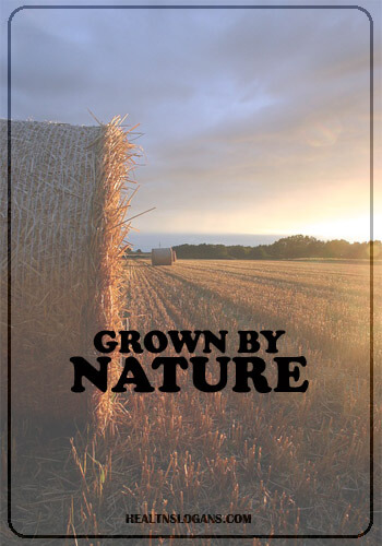 Organic Food Slogans & Sayings | Health Slogans