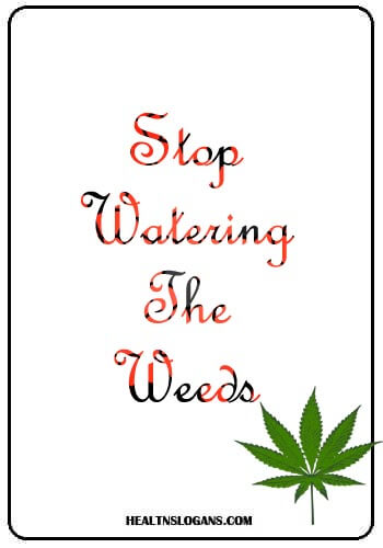 anti smoking slogans - Stop watering the weeds!!